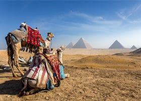 Anis Samen aus Ägypten
