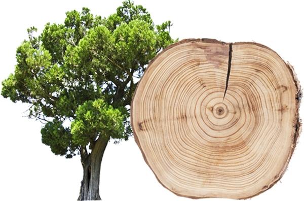 Wacholder Rauchsalz Baum und Scheibe